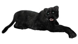 For blog-- black cat