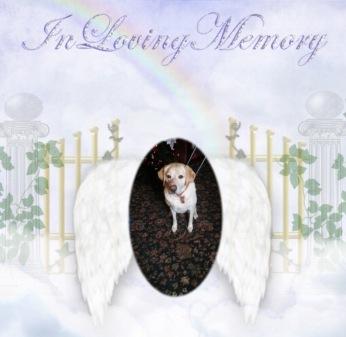 jessie-memory